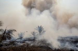 Kebakaran Hutan di kawasan perkebunan sawit di Riau (Dok. Greenpeace)