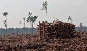 Perusakan Hutan Gambut di Riau (Dok. Greenpeace)