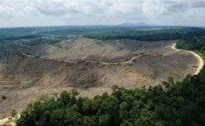 Kerusakan Hutan, Salah Satu Penyebab Pemanasan Global (Dok. Greenpeace)