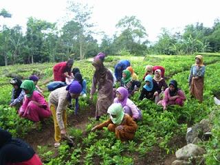 Masyarakat desa bekerja di ladang (riau.go.id)