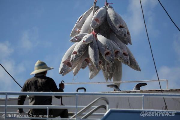 Kegiatan transshipment ikan tuna di Samudera Hindia (Dok. Greenpeace)
