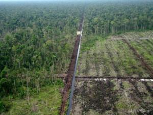 Kerusakan lahan gambut akibat ekspansi perkebunan sawit (dok. greenpeace)