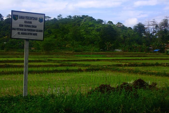 Lahan sawah di Nabire Papua (dok. villagerspost.com/M. Agung Riyadi)