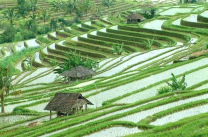 Sistem pertanian subak di Bali (dok. kemdikbud.go.id)