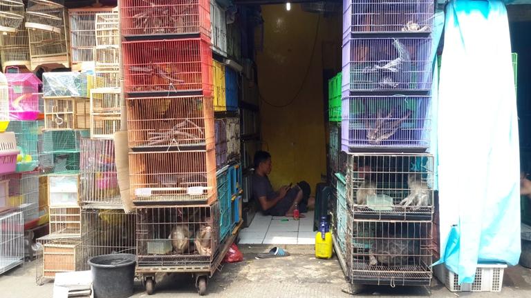 Pasar burung Jatinegara, menjual satwa dilindungi (dok. scorpion)