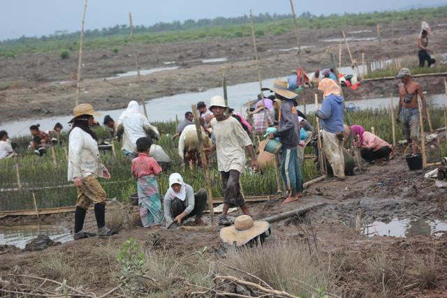 Nelayan Langkat melakukan pembibitan mangrove di pesisir Langkat, Sumatera Utara (dok. kiara)