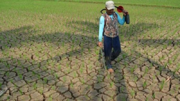 Sawah di wilayah Jawa Barat mengalami kekeringan dan terancam gagal panen (infopublik.id)