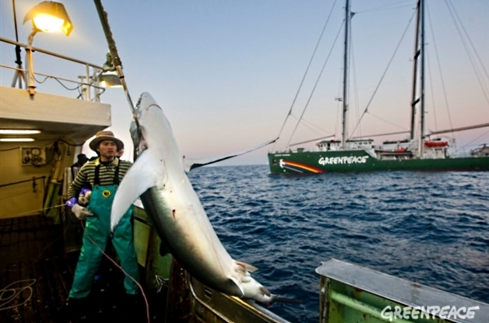 Penangkapan ikan hiu untuk kepentingan komersial (dok greenpeace)