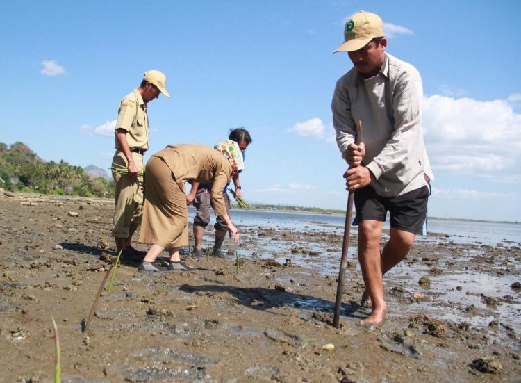 Masyarakat memperbaiki lahan mangrove (dok. oxfam/tua hasiholan)