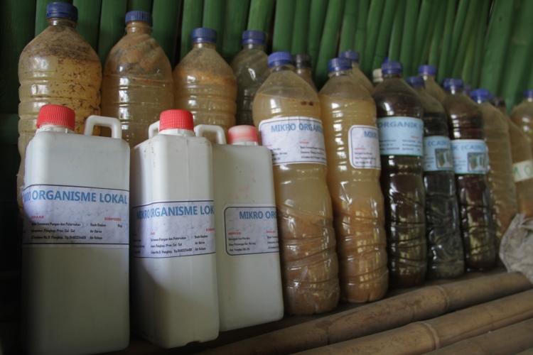 Mikro organisme lokal yang digunakan untuk membuat pupuk organi (dok. oxfam/Irwan Firdaus)