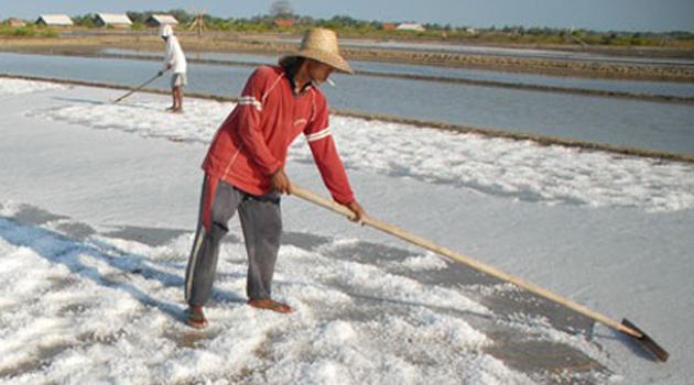 Petani garam menggarap lahan. Impor garam akan mematikan petani garam. (dok. kiara.or.id)