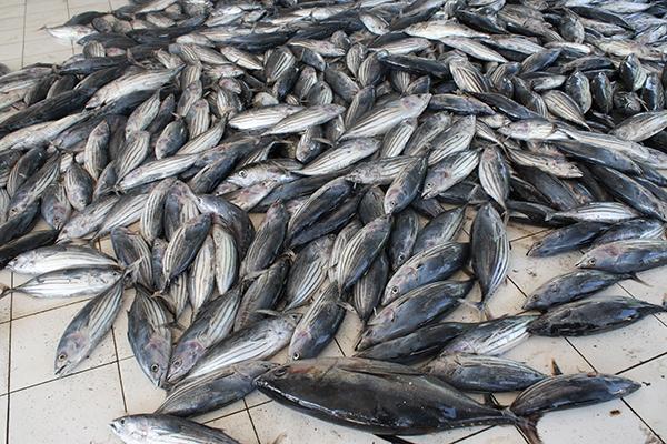 Ikan hasil tangkapan nelayan Indonesia. Pemerintah targetkan ekspor perikanan mencapai Rp80 triliun (dok. puskita.kkp.go.id)