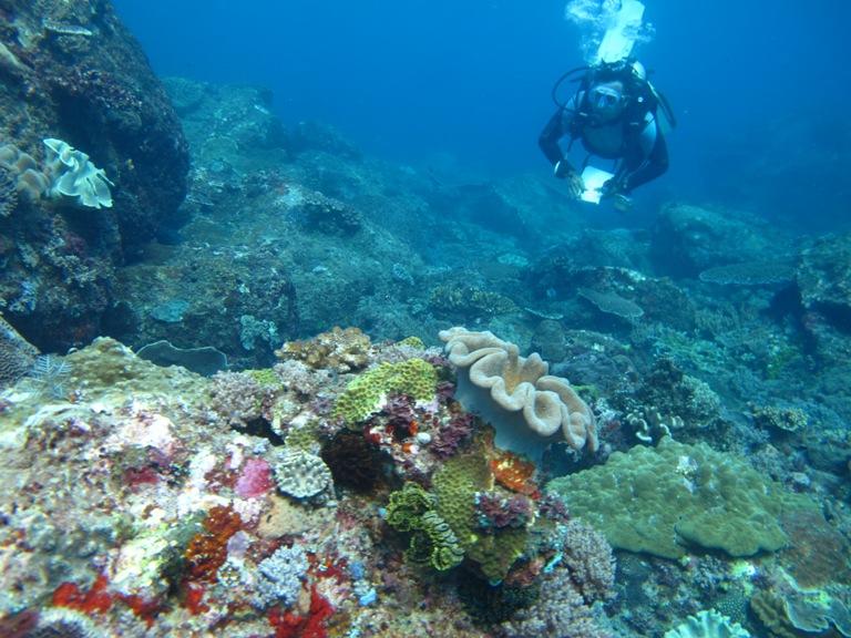 Kekayaan terumbu karang Indonesia (dok. wwf.or.id)