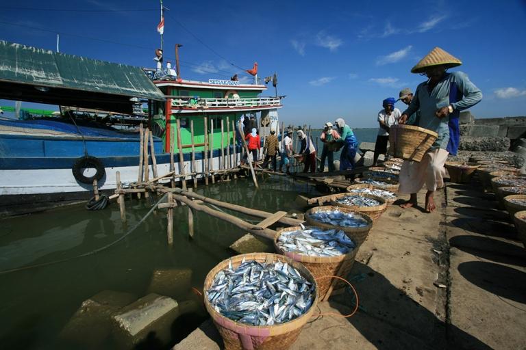 Tangkapan ikan nelayan. Pemerintah akan melarang total asing terjun di sektor perikanan tangkap (dok. pusluh.kkp.go.id)