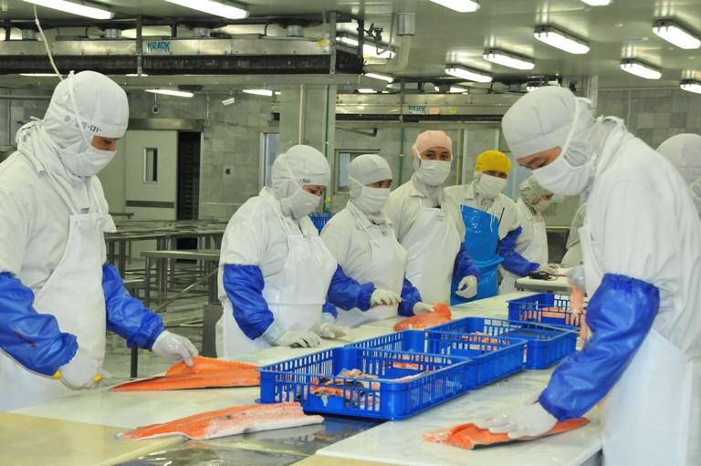 Industri pengolahan ikan. DPR tolak rencana Menteri KKP Susi Pudjiastuti izinkan asing masuk sektor pengolahan ikan (dok. kkp.go.id)