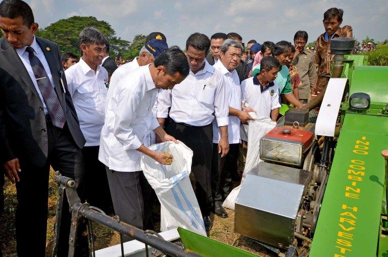 Presiden Joko Widodo di sebuah acara panen padi. Presiden Jokowi minta semua pihak antisipasi surplus beras (dok. setkab.go.id)