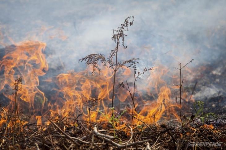 Kebakaran di lahan gambut. Greenpeace menilai ada tangan pemerintah di balik kasus kebakaran hutan dan lahan yang terjadi menahun (dok. greenpeace)