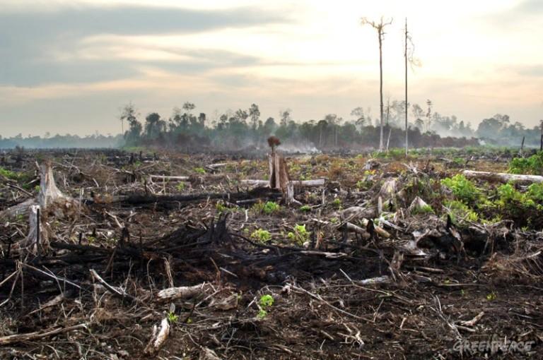 Kabut asap akibat kebakaran hutan di Riau. Kegagalan pemerintah lindungi gambut membuat Indonesia kembali tercekik asap (dok. greenpeace)
