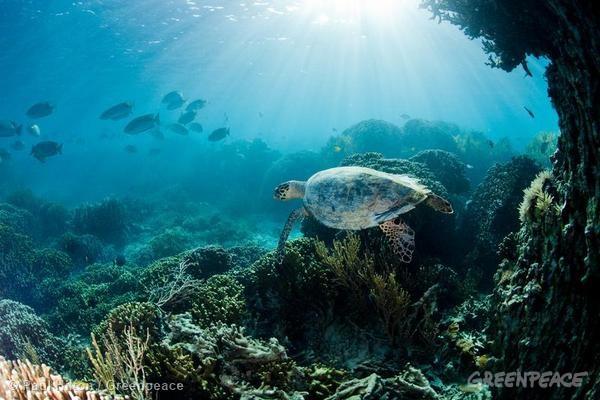Kekayaan laut Indonesia. Greenpeace helat festival laut, gugah kesadaran menjaga kekayaan laut Indonesia (dok. greenpeace)