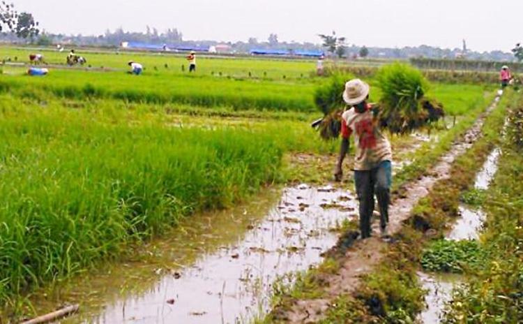 Petani bekerja di sawah. Petani terus bekerja dan berkarya meski tetap dibalut kemiskinan. Negara belum hadir untuk petani (dok. field-indonesia.or.id)
