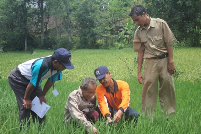 Penyuluh pertanian melakukan pendampingan (dok. id.wikipedia.org)