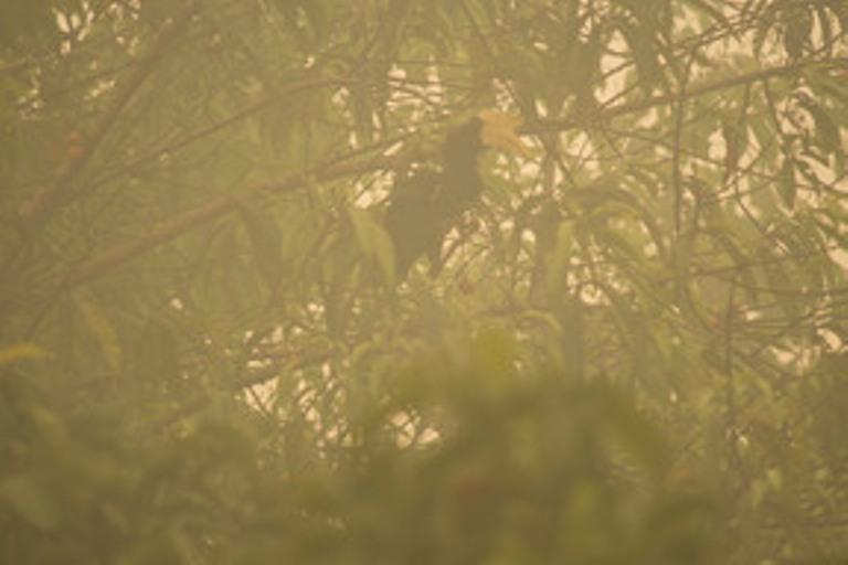 Asap kebakaran hutan dan lahan juga membuat hewan menderita (dok. greenpeace)