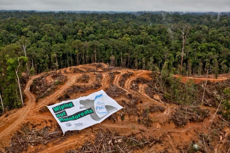 Kerusakan hutan akibat ekspansi perkebunan sawit. Krisis asap juga banyak disebabkan oleh perusahaan sawit (dok. greenpeace)