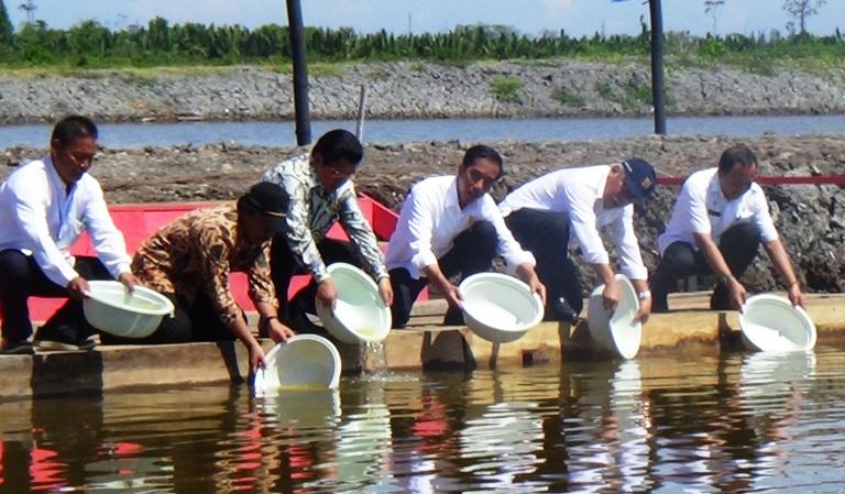 Presiden Joko Widodo saat berkunjung ke tambak udang di Mamuju, Sulawesi Barat (dok. kkp.go.id)
