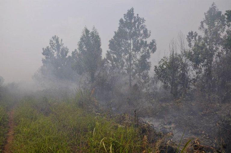Kabut asap akibat kebakaran hutan dan lahan di Riau (dok. riau.go.id)