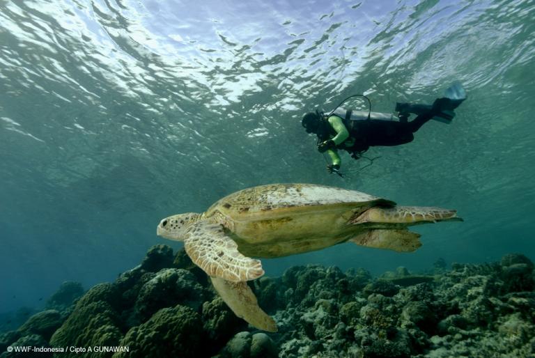 Kekayaan laut di provinsi Papua Barat yang baru mendeklarasikan diri sebagai Provinsi Konservasi (dok. wwf/cipto a gunawan)