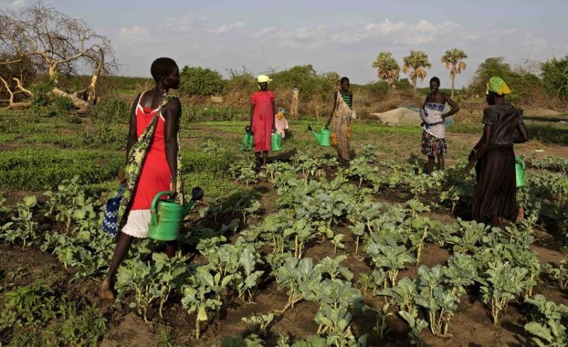 Petani perempuan di Sudan, Afrika (dok. oxfam.org)