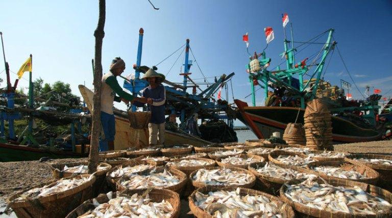 Ikan hasil tangkapan nelayan. Pemerintah akan wujudkan transparansi data perikanan (dok. kkp.go.id)
