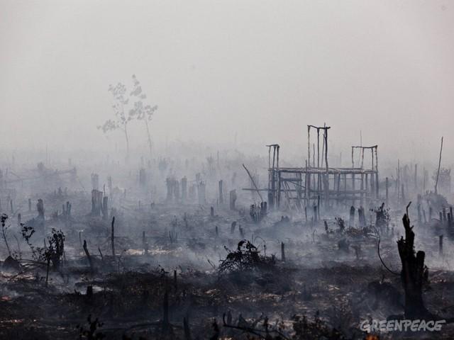 Kebakaran Lahan Gambut di Kalimantan Tengah (dok. greenpeace)