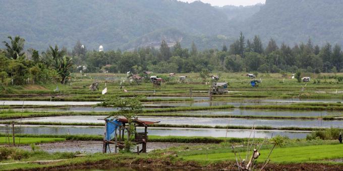 Pertanian rakyat skala kecil di Indonesia (dok. oxfam.org)