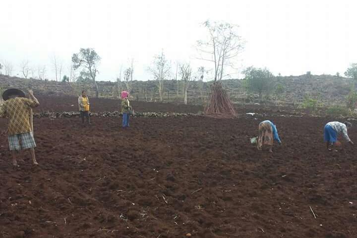 Petani menanami lahan di musim hujan. Pemerintah tegaskan pertanian tetap menjadi sektor strategis pembangunan (dok. bojonegorokab.go.id)