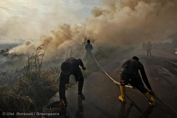 Emisi karbon dari kebakaran hutan dan lahan khususnya lahan gambut (dok. greenpeace)