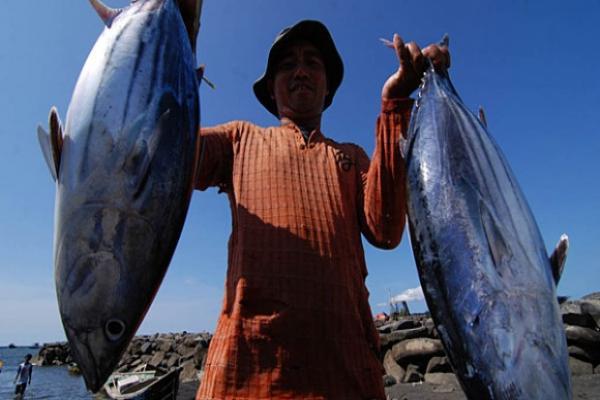 Ikan tuna, salah satu andalan ekspor Indonesia (dok. lp2t.kkp.go.id)