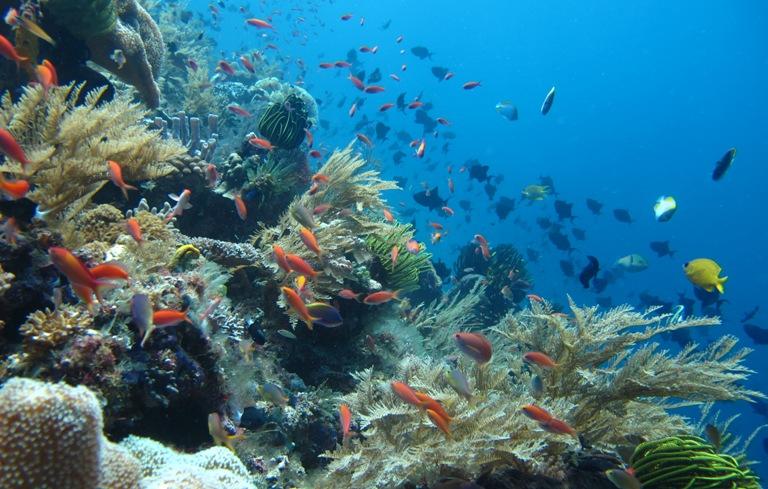 Kekayaan karang dan keragaman hayati laut di Maluku Barat Daya (dok. wwf.or.id)