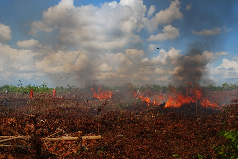 Kebakaran hutan di kawasan gambut Sebangau, Kalteng. Kasus karhutla menjadi contoh lemahnya tata kelola lingkungan hidup dan kehutanan (dok. wwf.or.id)