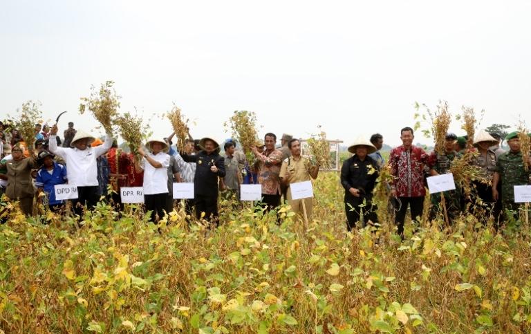 Menteri Pertanian Amran Sulaiman melakukan panen kedelai di Takalar, Sulawesi Selatan (dok. pertanian.go.id)