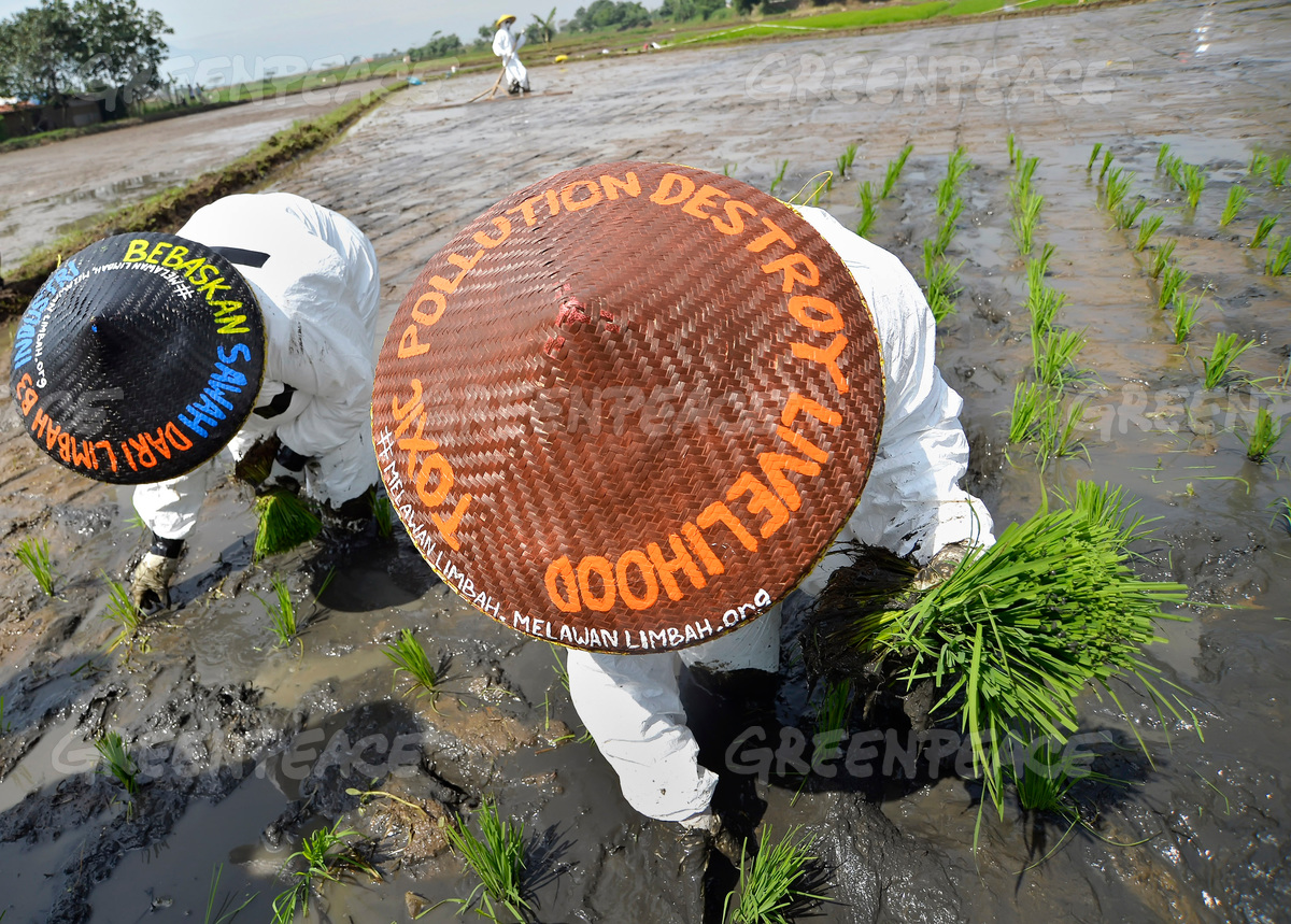 Imbauan selamatkan petani dari ancaman pencemaran lahan sawah oleh limbah pabrik tekstil (dok. greenpeace/yudi mahatma)