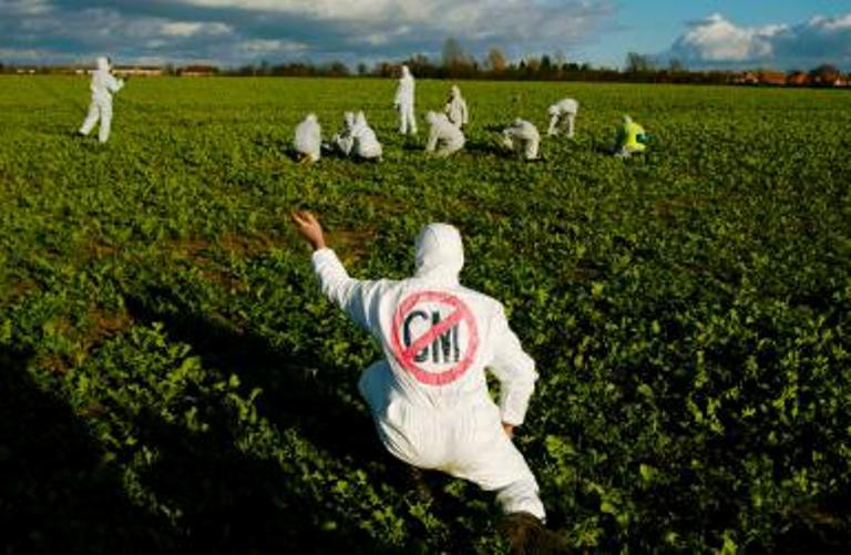 Aktivis menentang penanaman benih transgenik yang dinilai membhayakan lingkungan (dok. animalrights.about.com)