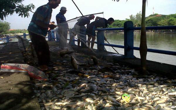 Limbah ikan yang berasal dari ikan mati di sungai. Limbah ikan bisa diolah menjadi limbah organik cair (dok. sahabatsungai.or.id)