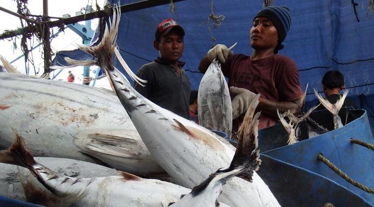 Ikan tuna hasil tangkapan kapal perikanan Indonesia diturunkan di pelabuhan (dok. kkp.go.id)