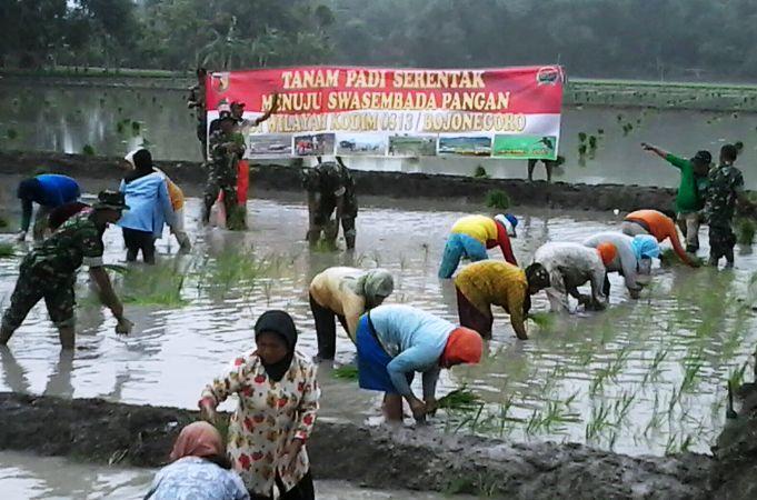 TNI membantu petani melakukan tanam padi serentak (dok. bojonegorokab.go.id)