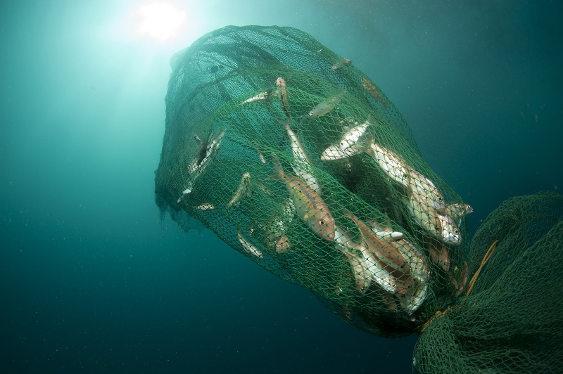 Alat tangkap trawl merusak lingkungan laut, diantaranya membunuh spesies terlindungi seperti hiu (dok. wwf.or.id)
