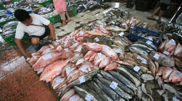 Ikan hasil tangkapan nelayan. KKP mengatakan, sektor perikanan tumbuh pesat (dok. kkp.go.id)
