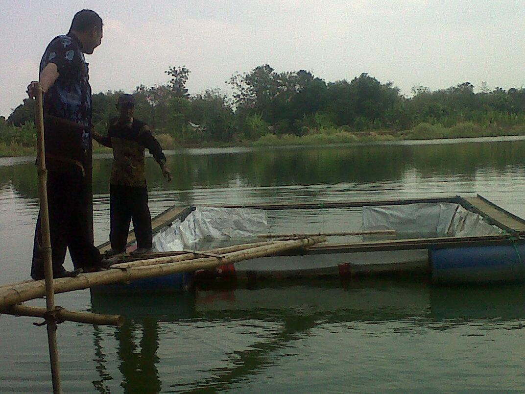 Budidaya ikan patin dengan keramba jaring apung. Pemda diminta antisipasi limbah budidaya ikan. (dok bojonegorokab.go.id)