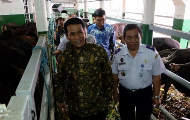 Menteri Pertanian Amran Sulaiman meninjau sapi-sapi yang diangkut kapal ternak KM Camara Nusantara I di Tanjung Priok (dok. pertanian.go.id)