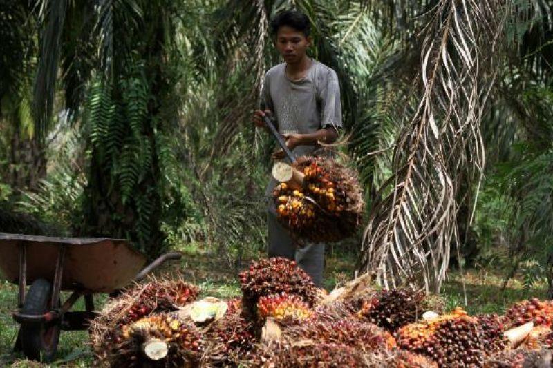 Pekerja perkebunan sawit mengangkut hasil panen (dok. bumn.go.id)